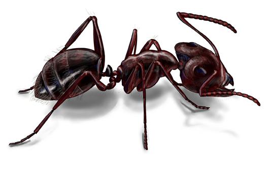 hangya-ant-petrasovits-eu